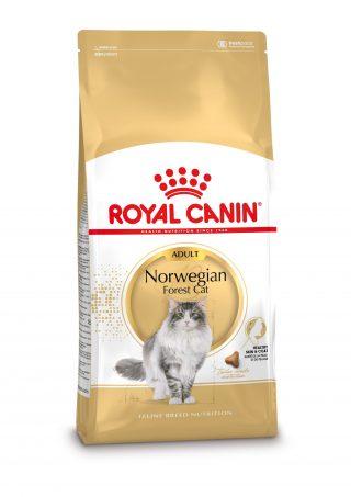 k-zak-Norwegian-Forest-Cat-Adult