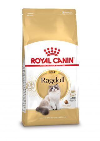 k-zak-Ragdoll-Adult
